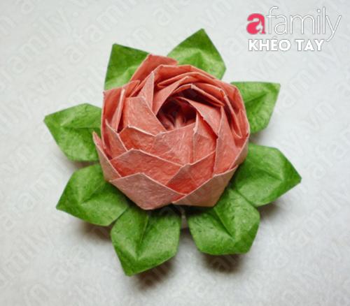 Gấp hoa sen giấy 12050536