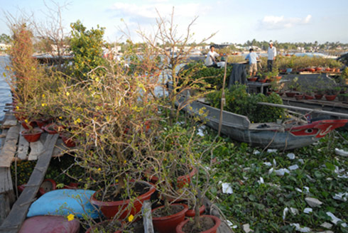 Chợ hoa nổi trên sông Cho-ho16