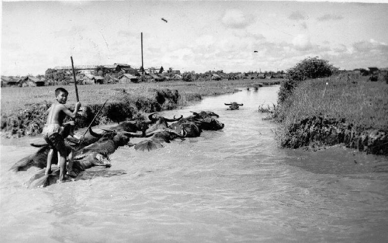 Miền Nam năm 1949 Cochin10