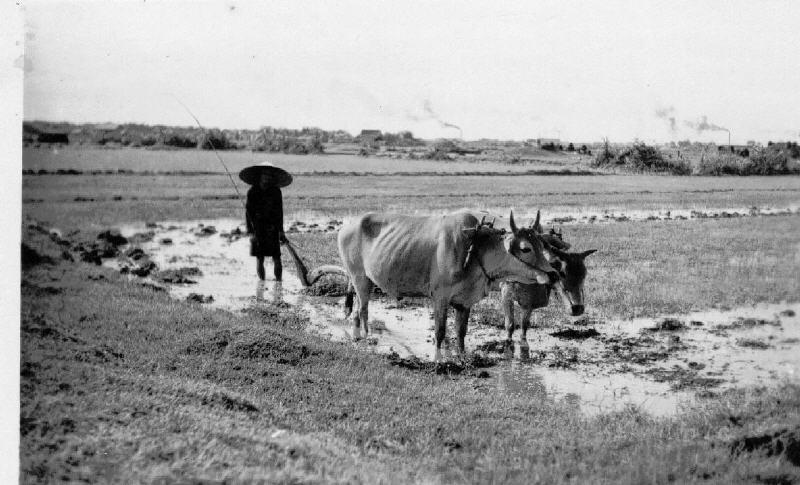 Miền Nam năm 1949 Cochin11