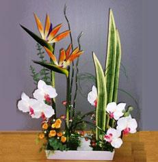 Nghệ thuật Ikebana và những điều bí ẩn Ikeban16