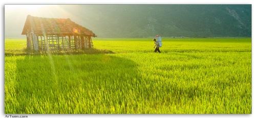 Việt Nam đẹp mộc mạc... Nguoid16