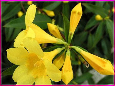 Ý nghĩa của các loài hoa Oanhnt11