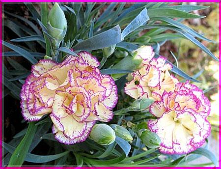 Ý nghĩa của các loài hoa Oanhnt12