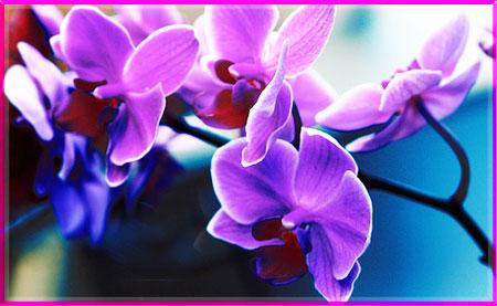 Ý nghĩa của các loài hoa Oanhnt13