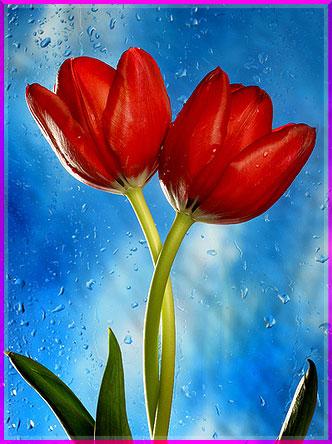 Ý nghĩa của các loài hoa Oanhnt14