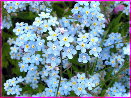Ý nghĩa của các loài hoa Oanhnt16