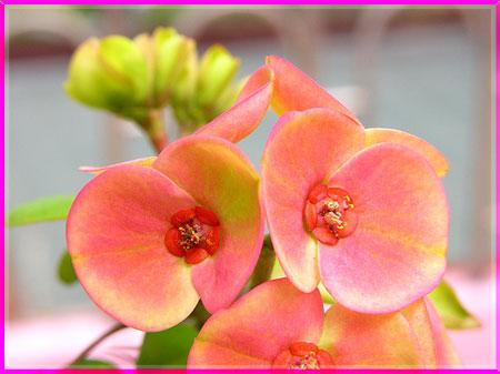 Ý nghĩa của các loài hoa Oanhnt17
