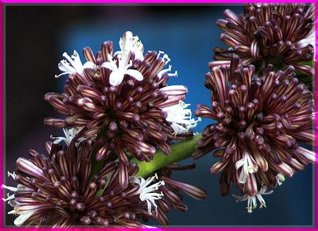 Ý nghĩa của các loài hoa Oanhnt18