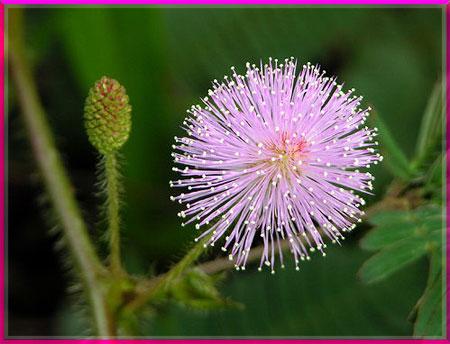 Ý nghĩa của các loài hoa Oanhnt19