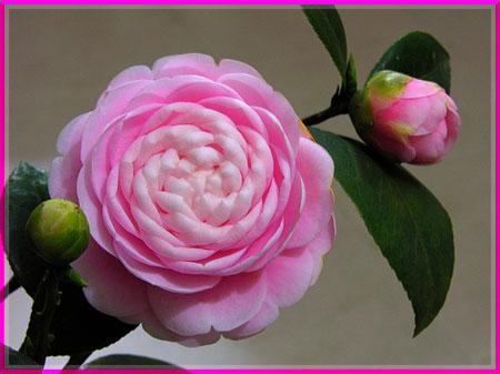 Ý nghĩa của các loài hoa Oanhnt20