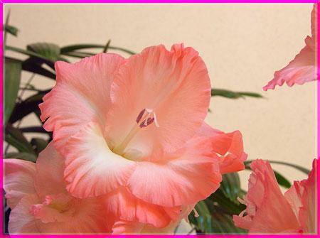 Ý nghĩa của các loài hoa Oanhnt21