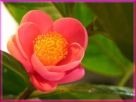 Ý nghĩa của các loài hoa Oanhnt22