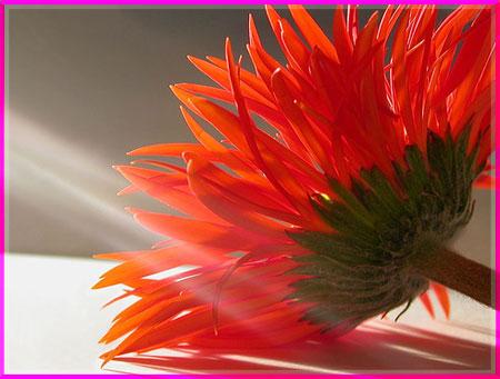 Ý nghĩa của các loài hoa Oanhnt23