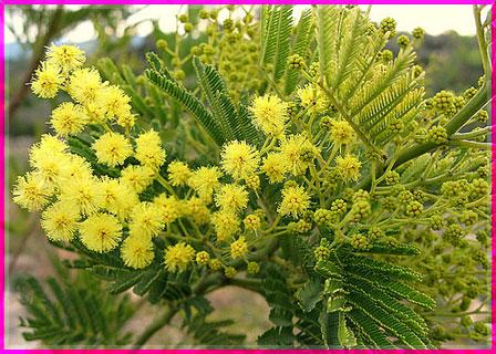 Ý nghĩa của các loài hoa Oanhnt24
