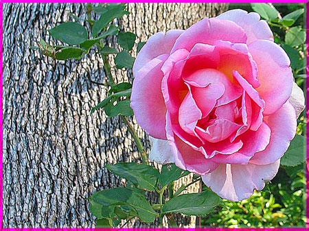 Ý nghĩa của các loài hoa Oanhnt25