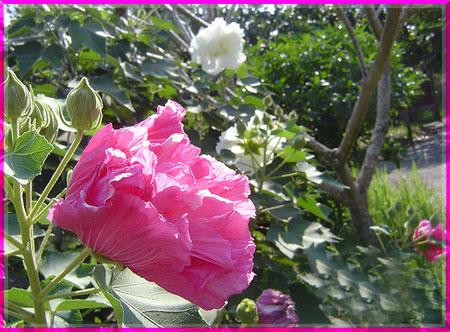 Ý nghĩa của các loài hoa Oanhnt27