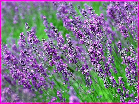 Ý nghĩa của các loài hoa Oanhnt28