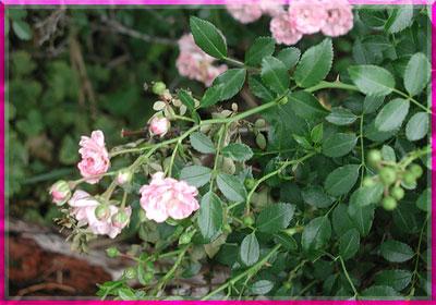 Ý nghĩa của các loài hoa Oanhnt29