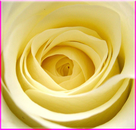 Ý nghĩa của các loài hoa Oanhnt31