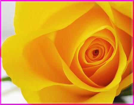 Ý nghĩa của các loài hoa Oanhnt33
