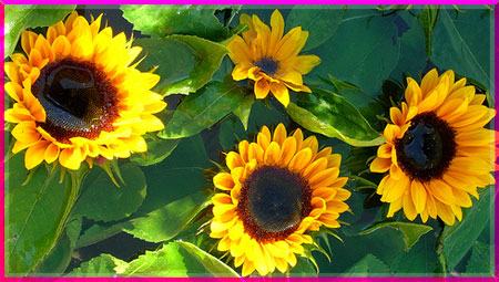 Ý nghĩa của các loài hoa Oanhnt34