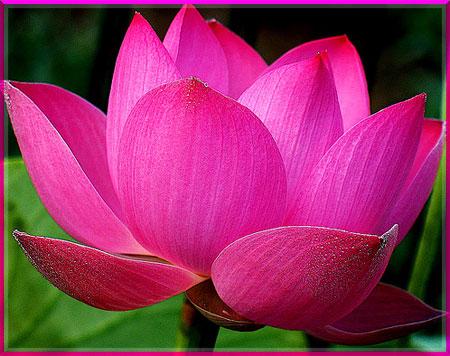 Ý nghĩa của các loài hoa Oanhnt36