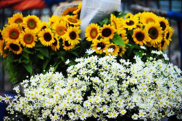 Mùa hoa cúc họa mi về trên phố Sam_5410