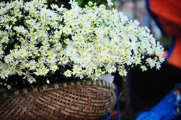Mùa hoa cúc họa mi về trên phố Sam_5411