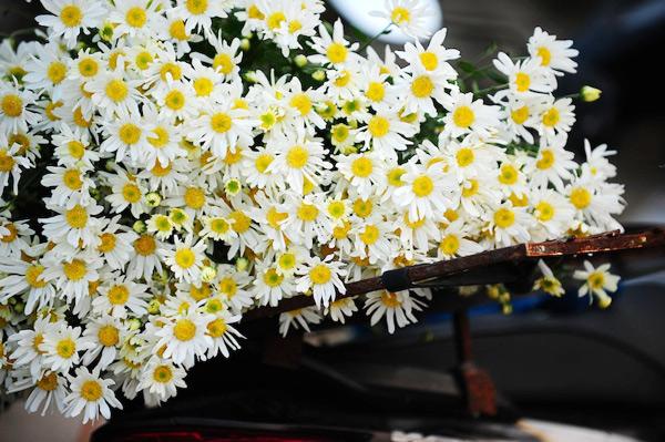 Mùa hoa cúc họa mi về trên phố Sam_5412