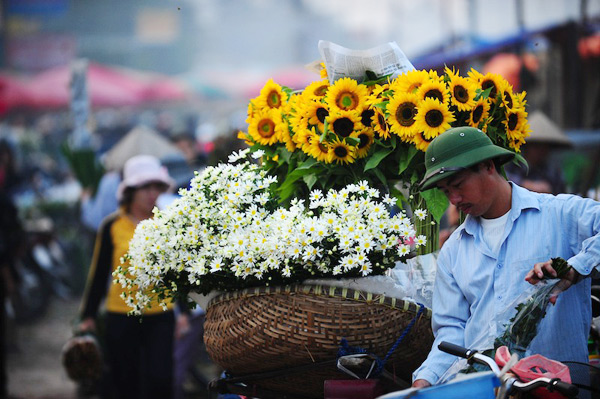 Mùa hoa cúc họa mi về trên phố Sam_5414