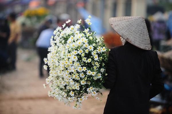 Mùa hoa cúc họa mi về trên phố Sam_5415