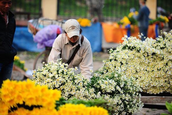 Mùa hoa cúc họa mi về trên phố Sam_5510