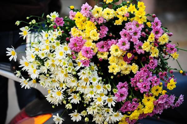 Mùa hoa cúc họa mi về trên phố Sam_5511