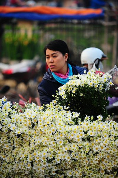 Mùa hoa cúc họa mi về trên phố Sam_5512