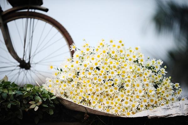 Mùa hoa cúc họa mi về trên phố Sam_5513