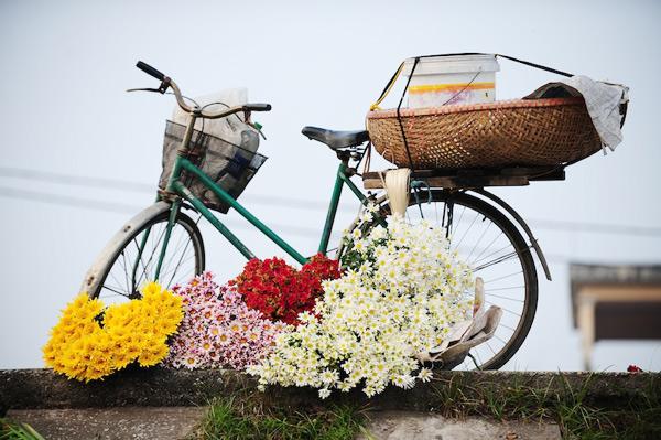 Mùa hoa cúc họa mi về trên phố Sam_5514