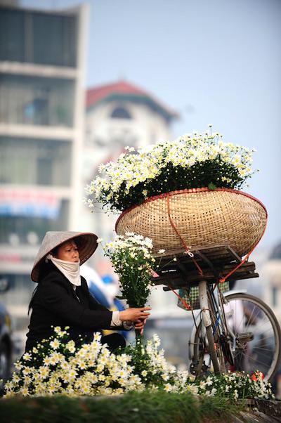 Mùa hoa cúc họa mi về trên phố Sam_5610