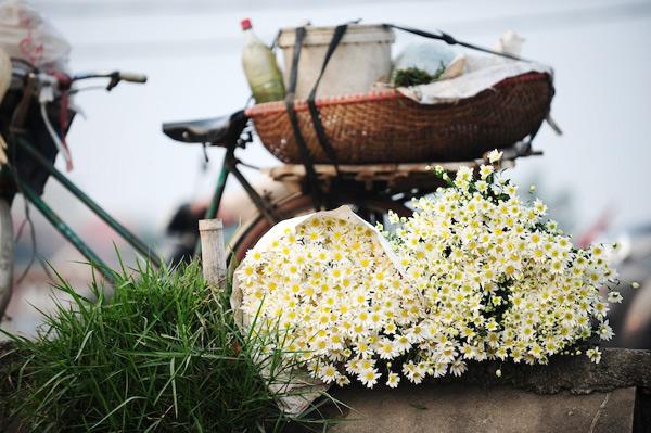 Mùa hoa cúc họa mi về trên phố Sam_5612