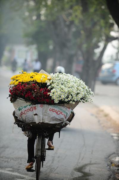 Mùa hoa cúc họa mi về trên phố Sam_5910