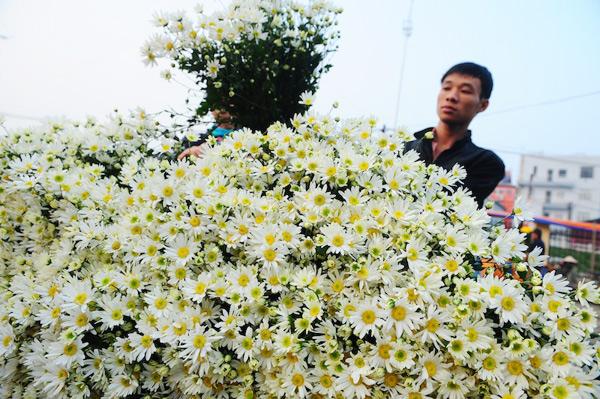 Mùa hoa cúc họa mi về trên phố Sam_9110