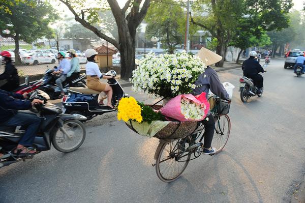 Mùa hoa cúc họa mi về trên phố Sam_9210