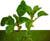 <FONT size=3><STRONG>منتدى الأشجار و النباتات</FONT>