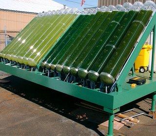 Produzir biocombustíveis a partir de microalgas 58591510