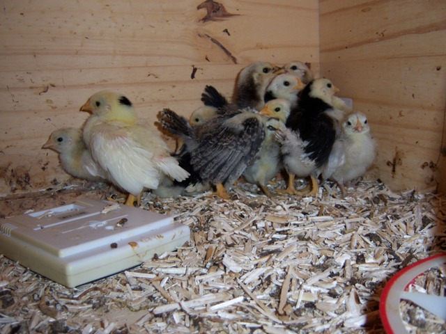 L'élevage de zimetzoc 02117
