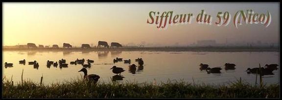 meilleurs voeux à tous et bonne année 2012 Siffl10