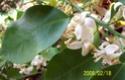 General - citrice cultivate in container Citrus10