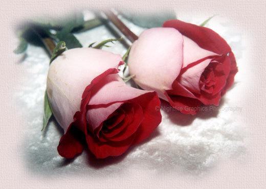 8 de marzo Dia de la Mujer. 2_rosa10