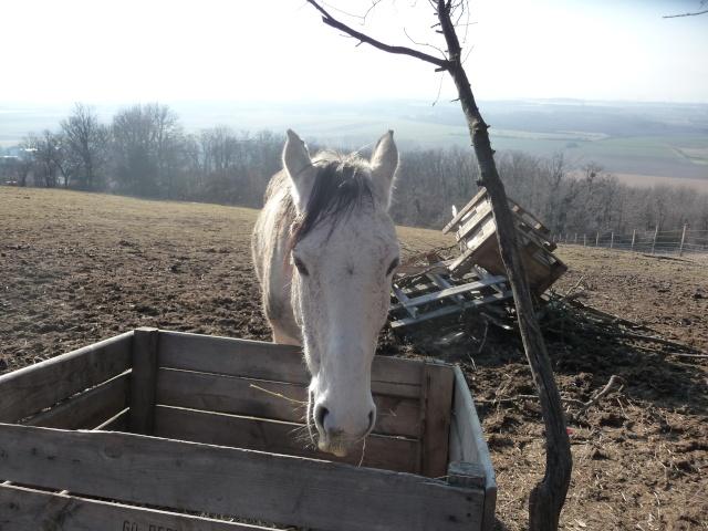 2 chevaux que j'ai en accueil Cheva100