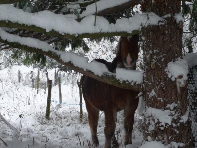 Concours Photos Décembre : Le Cheval et la Neige Chevau11